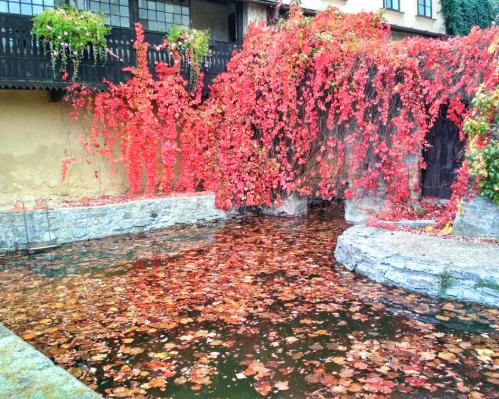 Listí a barvy